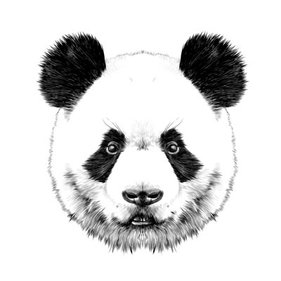 Draw a Panda Picture