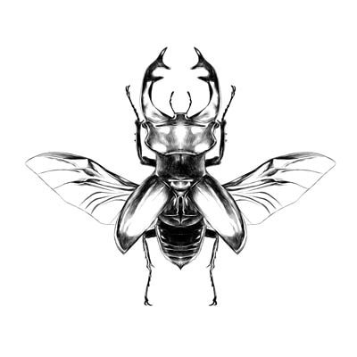 Draw a n Insect  Picture