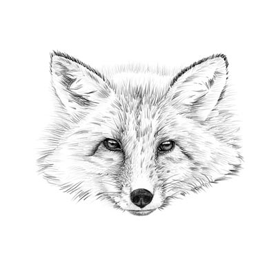 Draw Fox Head Picture