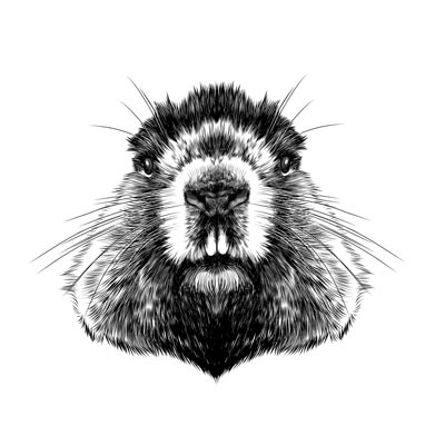 Draw a Beaver Picture