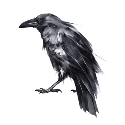 Draw Raven Picture