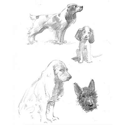 Drawing Dogs Picture
