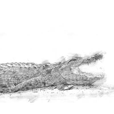 Draw a Crocodile Picture