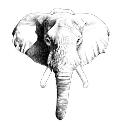Draw Elephants Head Picture