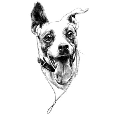 Draw a Dog Picture