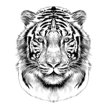 Draw a Tiger Picture