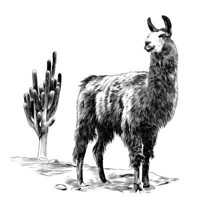 Draw a Lama Picture