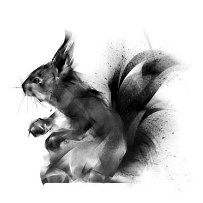 Draw a Squirrel Picture