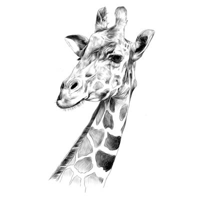 Draw a Giraffe Picture