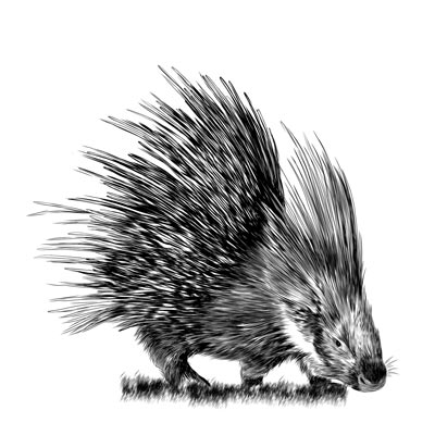 Paint Porcupine Picture
