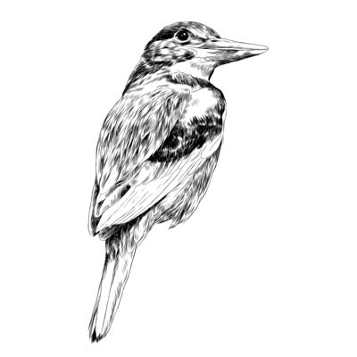Draw a Bird Picture