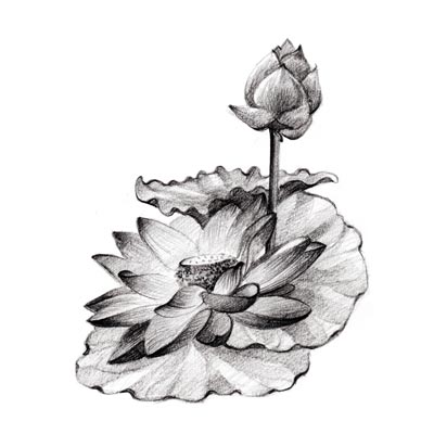 Draw a Lotus Flower Picture