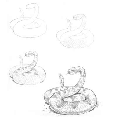 Draw a Snake Picture