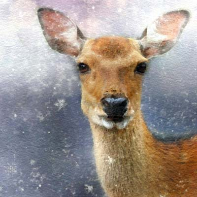Paint a Deer Picture