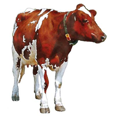 Paint a Cow Picture