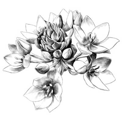 Draw Flower Picture