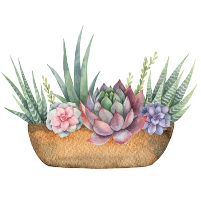 Watercolour Succulents Picture