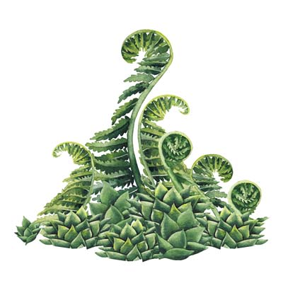 Watercolour Fern Picture