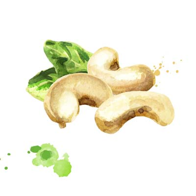 Paint Cashew Nuts Picture