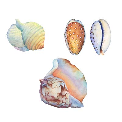Paint Sea Shells No 5 Picture