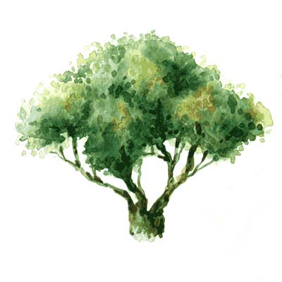 Paint Tree in Watercolour Picture