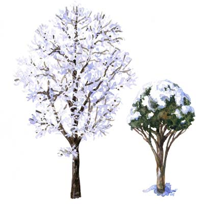 Paint Trees in Snow Picture