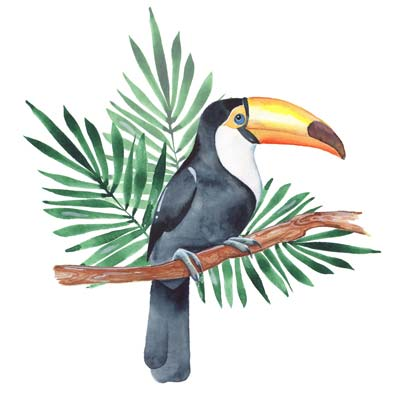 Paint a Toucan Picture