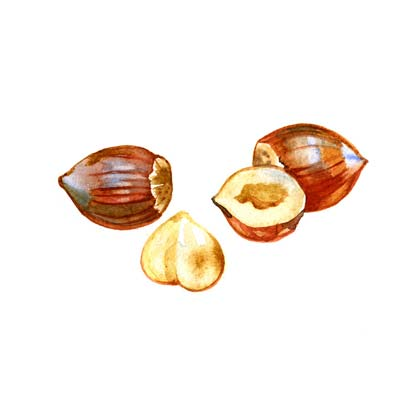 Paint Hazelnuts Picture