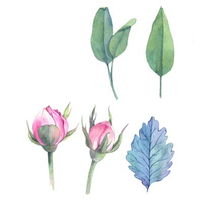 Paint Rose Buds Picture